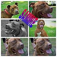 Adopt A Pet :: Sammie - ROME, NY