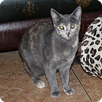Adopt A Pet :: Coco - Cypress, TX