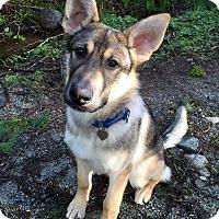 Adopt A Pet :: Dragon - Pitt Meadows, BC