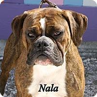 Adopt A Pet :: Nala - Englewood, FL