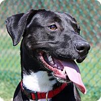 Adopt A Pet :: Sven - Troy, MI