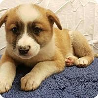 Adopt A Pet :: Atlas - Modesto, CA