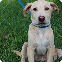 Adopt A Pet :: Loki - SOUTHINGTON, CT