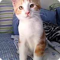 Adopt A Pet :: Butterscotch - Eagan, MN