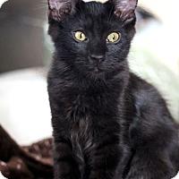 Adopt A Pet :: Alexander & Angelica - Studio City, CA