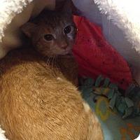 Adopt A Pet :: Caesar - Salisbury, MA