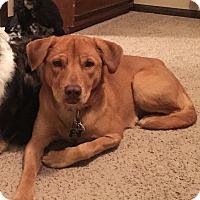 Adopt A Pet :: Daisy - Wichita, KS