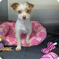 Adopt A Pet :: *LILY - Norco, CA