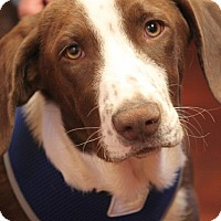 Adopt A Pet :: Zeke - Jewett City, CT