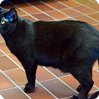 Adopt A Pet :: JJ - Des Moines, IA