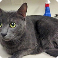 Adopt A Pet :: Shadow - Wildomar, CA