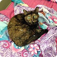 Adopt A Pet :: Sadie - Cerritos, CA