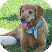 Adopt A Pet :: Woody - Yorktown, VA