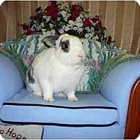 Adopt A Pet :: Spidey - Newport, DE