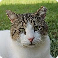 Adopt A Pet :: Jaspurr - Monroe, NC