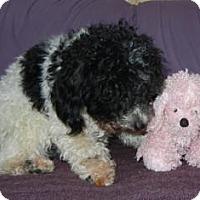 Adopt A Pet :: Oreo  ADOPTION PENDING!! - Antioch, IL