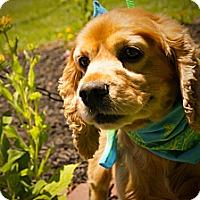 Adopt A Pet :: Murphy - Princeton, KY