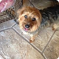 Adopt A Pet :: Rascal - North Port, FL