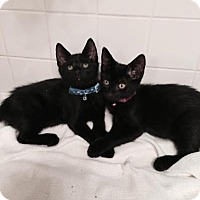 Adopt A Pet :: Vincent & Buddy - Raritan, NJ