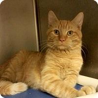 Adopt A Pet :: B-5 - Triadelphia, WV