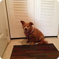 Adopt A Pet :: Trixie - Naples, FL