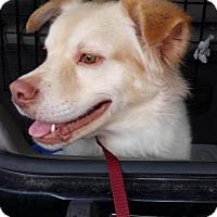 Adopt A Pet :: Marcello - Middletown, RI