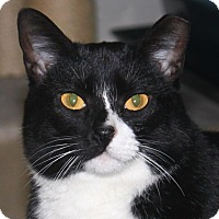 Adopt A Pet :: Millie - North Branford, CT
