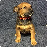 Adopt A Pet :: Hope (HAS BEEN ADOPTED) - Buffalo, NY