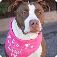 Adopt A Pet :: Hannah - Grand Rapids, MI