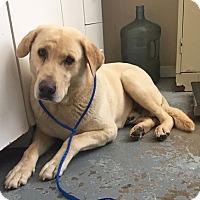 Adopt A Pet :: 4339 - Calhoun, GA