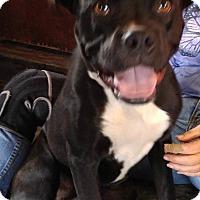 Adopt A Pet :: Zeus - Jarrell, TX