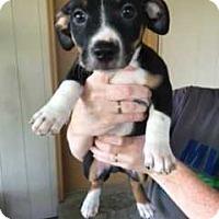 Adopt A Pet :: GB_Uno - E. Greenwhich, RI