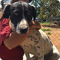 Adopt A Pet :: Neuxxus meet me 8/19 - Manchester, CT