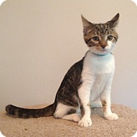 Adopt A Pet :: Chica - Warrenton, MO