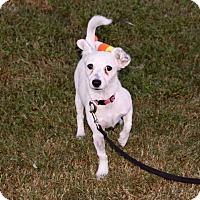 Adopt A Pet :: MERRICK - Phoenix, AZ