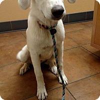 Adopt A Pet :: Polka - Enfield, CT