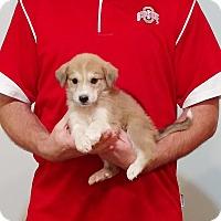 Adopt A Pet :: Sophie - South Euclid, OH