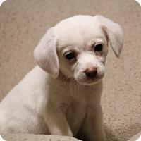 Adopt A Pet :: Daisy - Yadkinville, NC