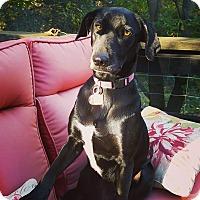 Adopt A Pet :: Ike - Fort Atkinson, WI