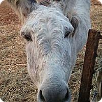Adopt A Pet :: Agnass - Loudon, TN
