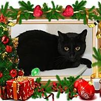 Adopt A Pet :: RT - Bradenton, FL