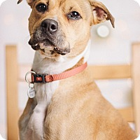 Adopt A Pet :: Buddah - Portland, OR
