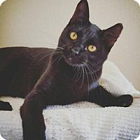 Adopt A Pet :: Flash - Fredericksburg, TX