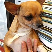 Adopt A Pet :: BUDDER - Anderson, SC