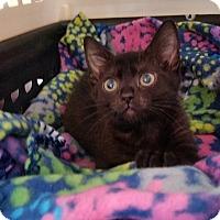 Adopt A Pet :: MeMe - Tampa, FL