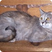 Adopt A Pet :: Lillian - Colorado Springs, CO