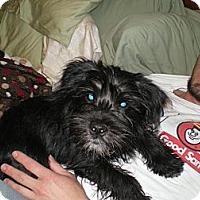Adopt A Pet :: Dupree - Apex, NC