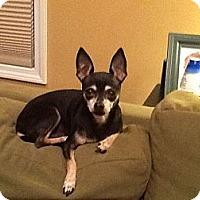 Adopt A Pet :: Nina - Acushnet, MA