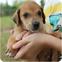 Adopt A Pet :: Ricky - Richmond, VA