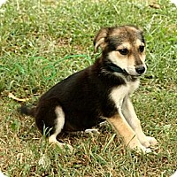 Adopt A Pet :: Emmie - Brattleboro, VT